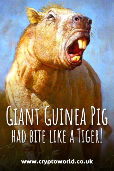 Giant Guinea Pig had bite like a Tiger!