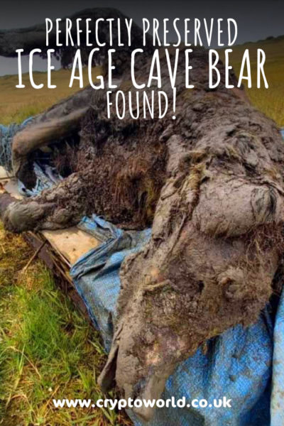 Fully Preserved Ice Age Bear Found!
