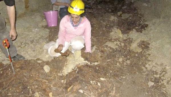8 Million Animal Mummies