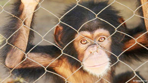 Animal rights group asks US courts to recognize chimpanzees as 'legal persons'