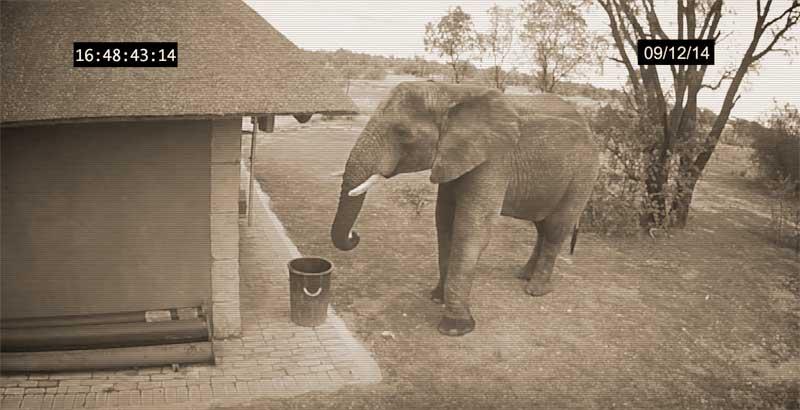 elephant-trash-can