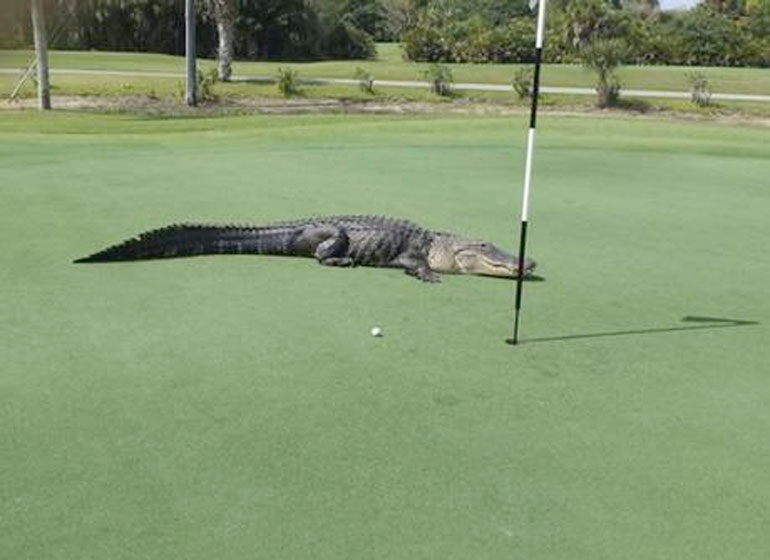 The club owner is toying with calling the alligator 'viral' over the fuss it has caused online
