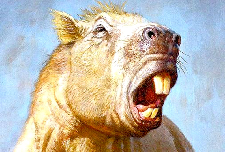 giant-guinea-pig