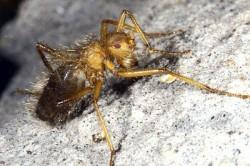 Terrible, Hairy Fly