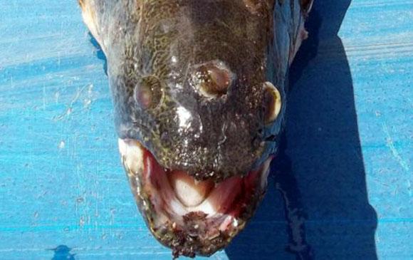 Blinky Three-Eyed Fish