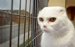 Ugly Lord Voldemort Cat