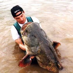 Lake Monster or Wells Catfish?